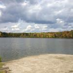 Trees & The Lake